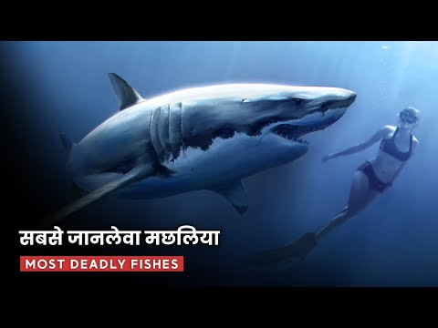 दुनिया की सबसे खतरनाक आदमखोर मछलिया || Most Dangerous & Deadliest Fish Species in World(Rahasya Tv)