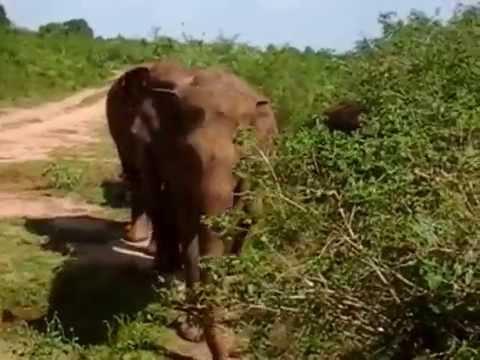 Sri lanka safari Udawalawa national park
