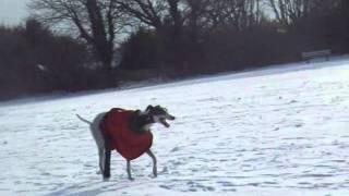Our Greyhound, Boysie