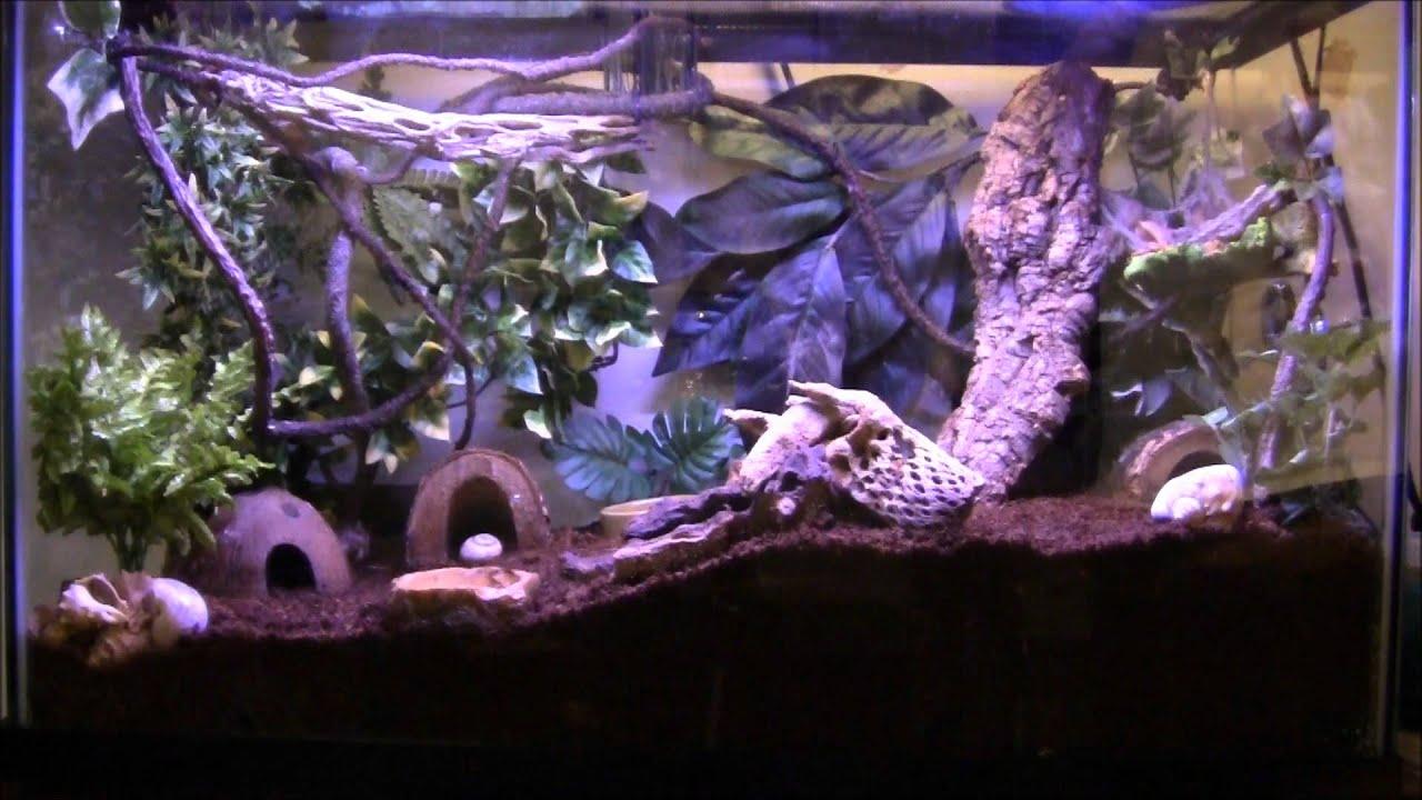 Hermit Crab / Crested Gecko Tank Update - YouTube 10 Gallon Vivarium
