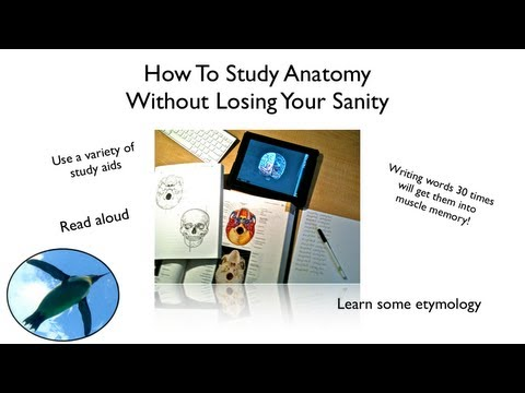 How To Study Anatomy Without Losing Your Sanity!