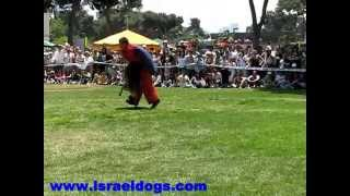 Israeldogs- Very hurting dog attack