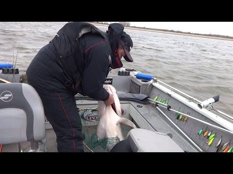рыбалка на нижней волге ютуб