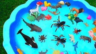 Learn Colors With Animals and Sharks in Blue Water Tub Toys Educational Video For Kids