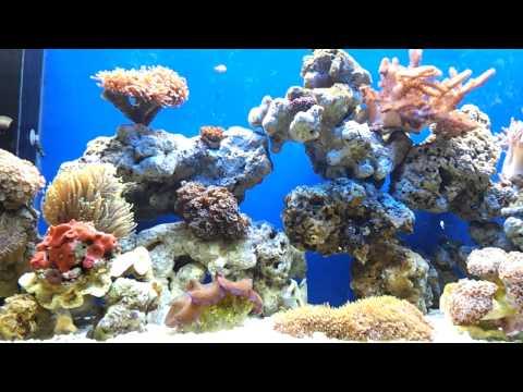 My Marine Reef Tank Malaysia.