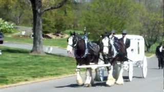White Horse Drawn Hearse Funeral (Adams Funeral Home Aquasco, Md)