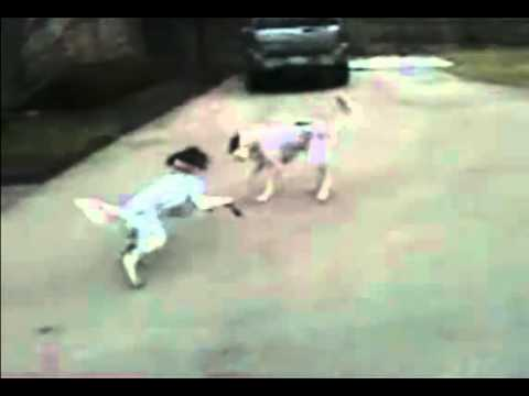 Puppy Fakes His Own Death - Original -