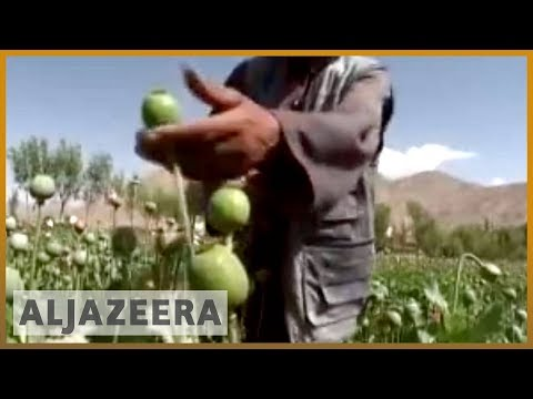 Afghan farmers growing poppies to survive - 27 Aug 07