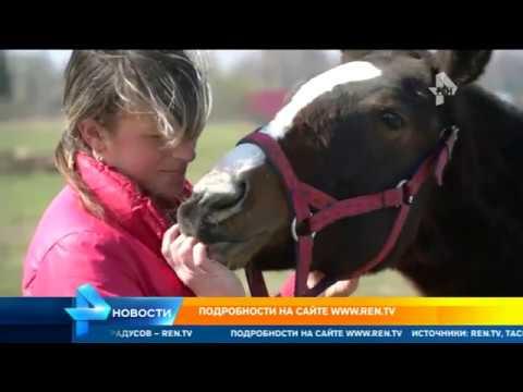 Концлагерь для скакуна: живодер в Рославле морит голодом и избивает лошадей