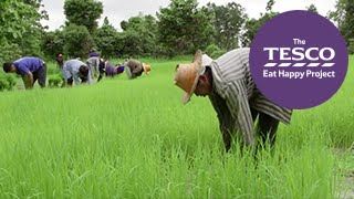 Remarkable Rice: how does rice grow