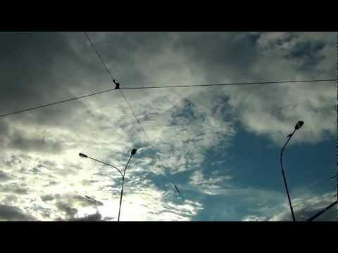 Zamarzam - Muchy