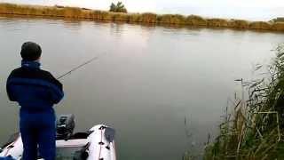 что ловят на муху рыбаки