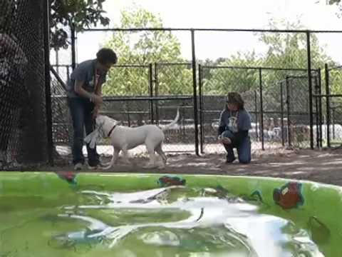 The Fairfax County Animal Shelter Ribbon Cutting Ceremony