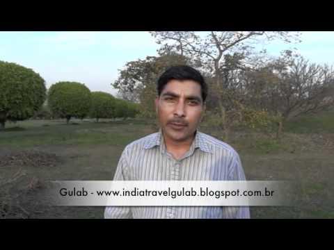 Gulab - Tour guide, driver, India