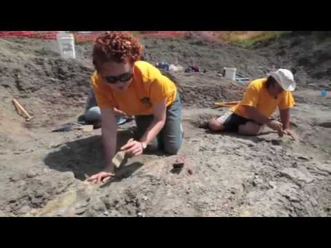 Canadian Fossil Discovery Centre - Media Coverage by Winnipeg Free Press (video) Video