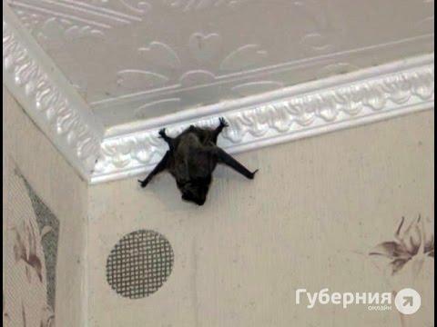 Непрошеный гость перепугал среди ночи двух девушек.MestoproTV