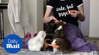 Woman Feeds Guinea Pigs Slices of Carrots - Daily Mail