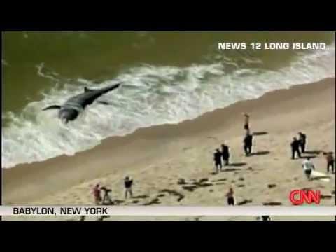Гигантская акула, прибитая к берегу.     Петро Жир