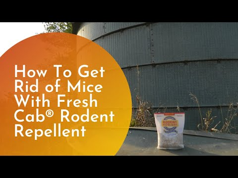 how to get rid of rodent in car
