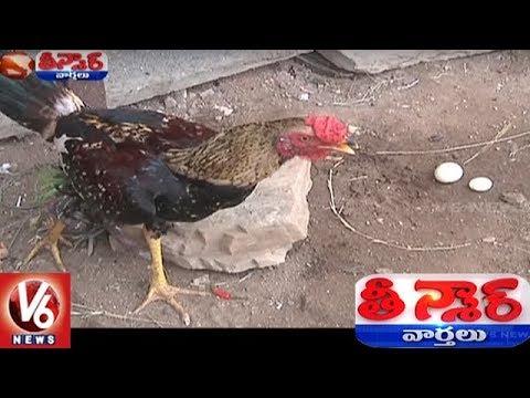Rooster Lays Eggs, Amazes People In Khammam District | Teenmaar News
