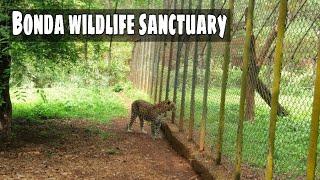 Bonda wildlife sanctuary | animals found in Bonda wildlife sanctuary | Goa vlog
