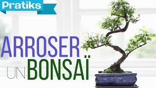 Bonsaï : Comment arroser un bonsaï