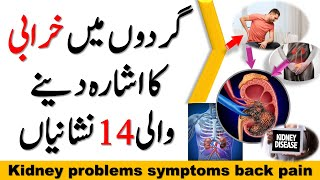 Kidney problems symptoms back pain and 13 more in Urdu / Hindi