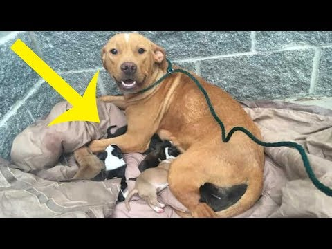 Animal Shelter Staff Discovers Pit Bull Mama And 10 Newborns Dumped On Their Doorstep