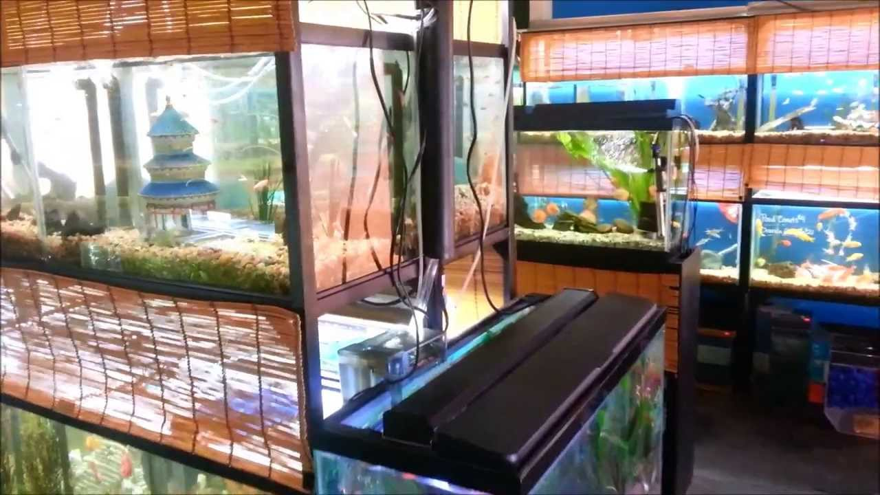 Local fish store tour aquatopia bend or youtube for Local fish stores