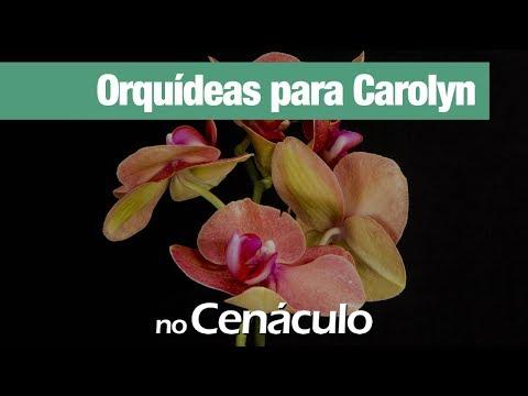 Orquídeas para Carolyn | no Cenáculo 03/04/2020