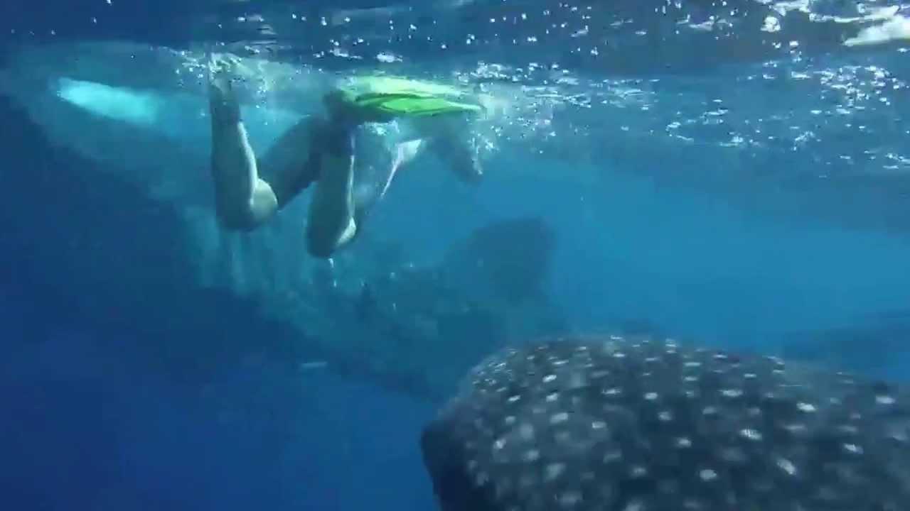 Pro dive wiro dive sonderreisen whale sharks isla for Wirodive