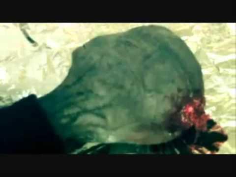Extraterrestre foi morto e filmado, e deixa um bracelete de teletransporte wmv480p H 264 AAC