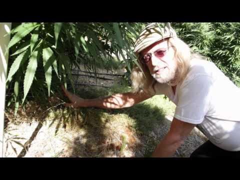 Jorge Cervantes: Humboldt Local 2011 Medical Marijuana / Cannabis (Part 2)