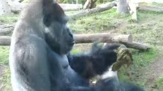 Most Disgusting Monkey Video Ever