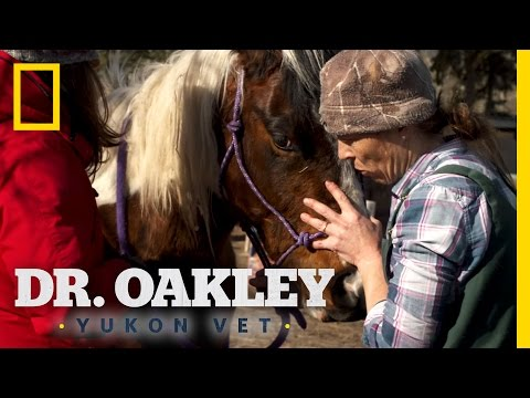 Hoof to the Head | Dr. Oakley, Yukon Vet