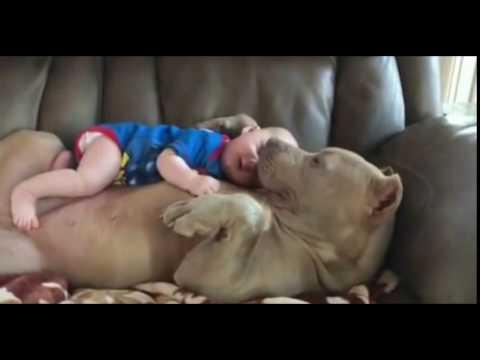 Un bebé y su perro con una relación más que especial