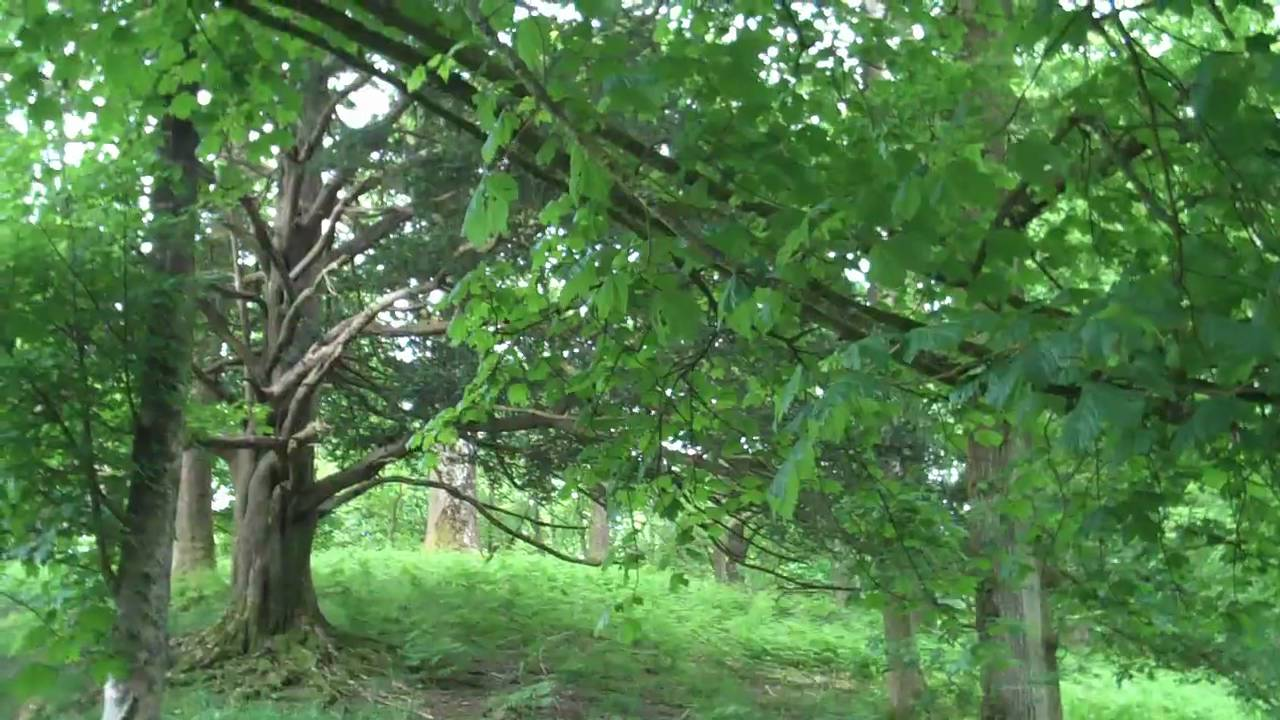 this lime tree bower my prison essay