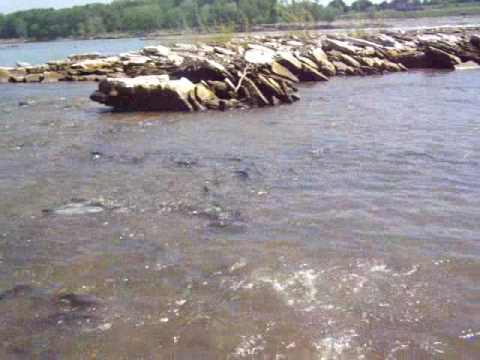Ohio river fishing netting a huge catfish swiming by youtube for Ohio river fish