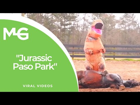 Just a man dressed like a Tyrannosaurus Rex doing tricks with his very cooperative horse