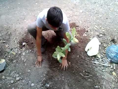 Plantar un arbol prepa mochis 3-14 2015