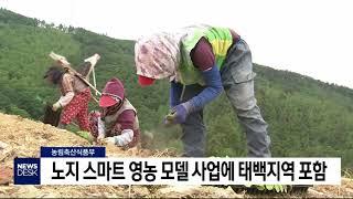 일데월투]노지 스마트 영농 모델 사업에 태백시 포함