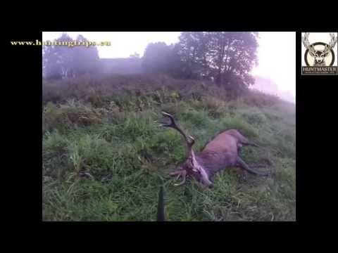 Red stag hunting ;hunting in poland ; Driven hunt; Roe buck