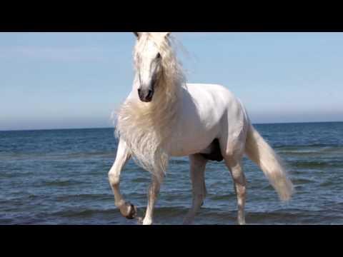 """Песни из кино и мультфильмов - Я подозвал коня (к/ф """"Пацаны"""")"""