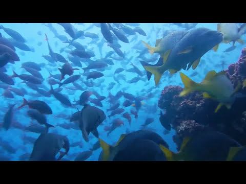 Underwater in the Galapagos Islands: Sea Turtles, Sharks, Sea Lions, Rays and Fish