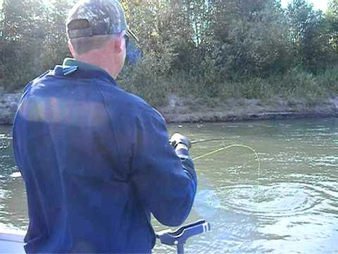Summer Steelhead on the Cowlitz River with Rob Sweem
