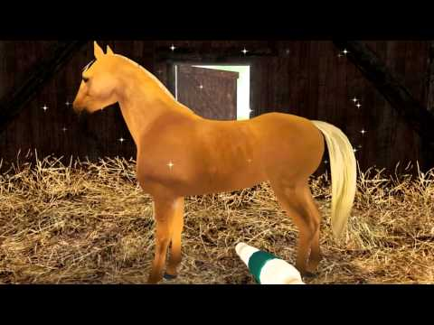horse games free download mac