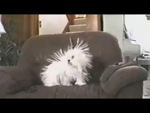 Hayvanlar - Köpeğin Tüyleri Diken Diken Oluyor