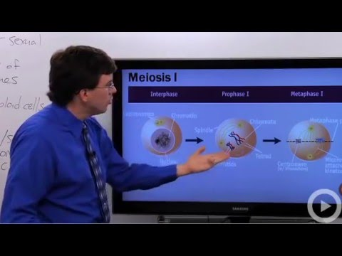 Meiosis video