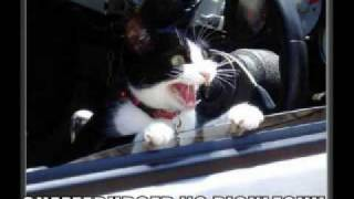 FUNNY CAT PICS EPISODE 2!!!!!