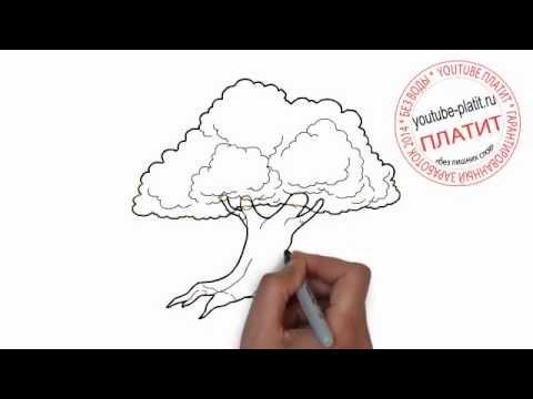 Нарисованные деревья  Как нарисовать старый дуб